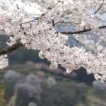 japan-699741_1280 (640x481)